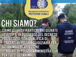 L'Organizzazione internazionale protezione animali cerca volontari