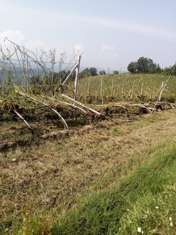 Maltempo: le prime stime dei danni causati da vento e grandine 1