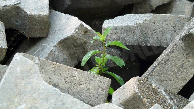 Consumo del suolo: addio a cento ettari ogni giorno