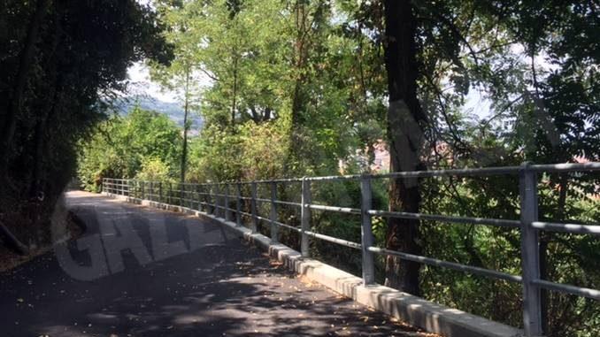 Rami e piante che sporgono su strade e ferrovie vanno tagliati al più presto