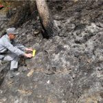 Allevatore settantenne accusato di aver provocato un incendio boschivo