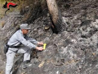 Allevatore di Pianfei accusato di aver provocato un incendio boschivo