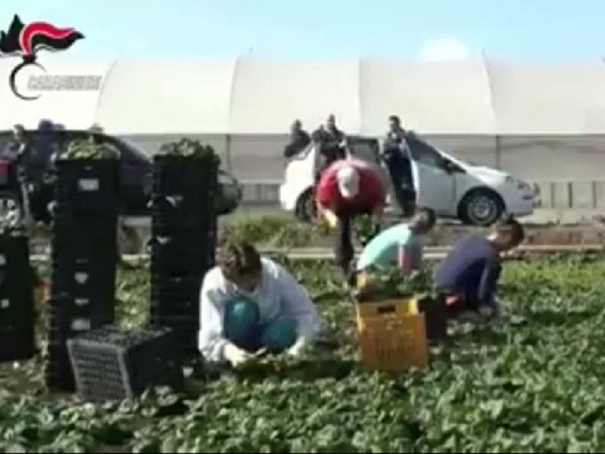 peveragno fragole