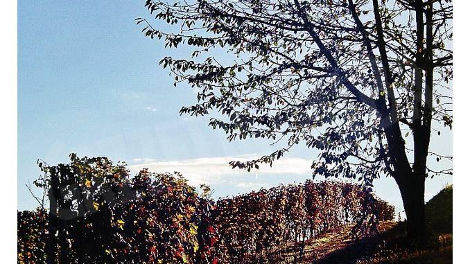 Albèisa: servono più alberi accanto ai vigneti