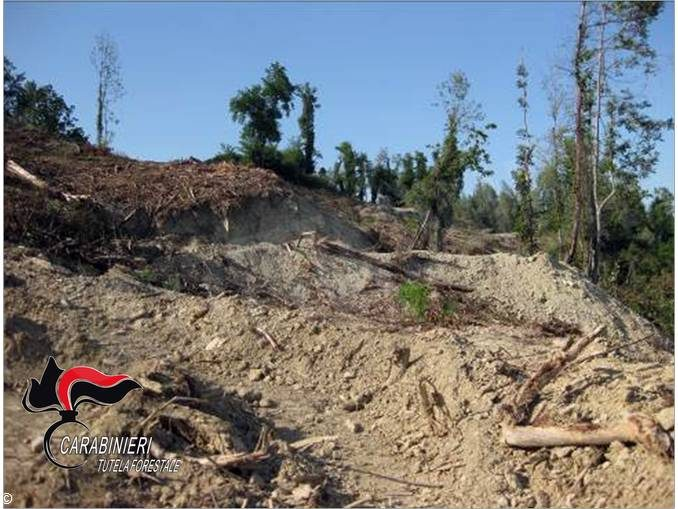 Narzole: i carabinieri forestali bloccano lavori non autorizzati di abbatimento di un bosco 1