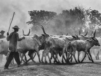 Scatto di un lamorrese al concorso fotografico di National Geographic