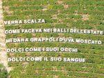 Martedଠ15 corsa podistica non competitiva tra i vigneti di Castiglione Tinella