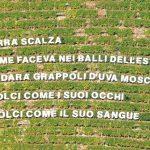 Versi poetici sulle vigne di Langa, succede a Castiglione Tinella