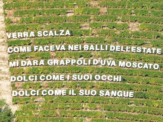 Versi in vigna a Castiglione Tinella 2
