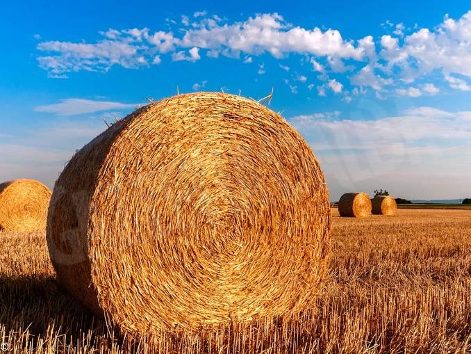 agricoltura campo paglia