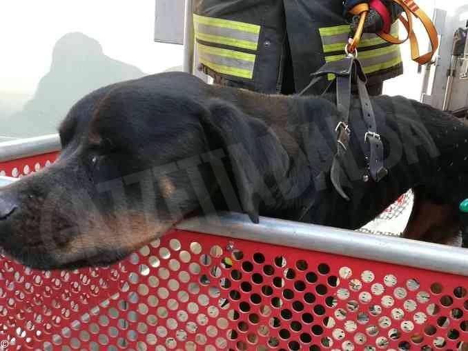 Cane rinchiuso da giorni in una casa di Agliano Terme: denunciato il proprietario.