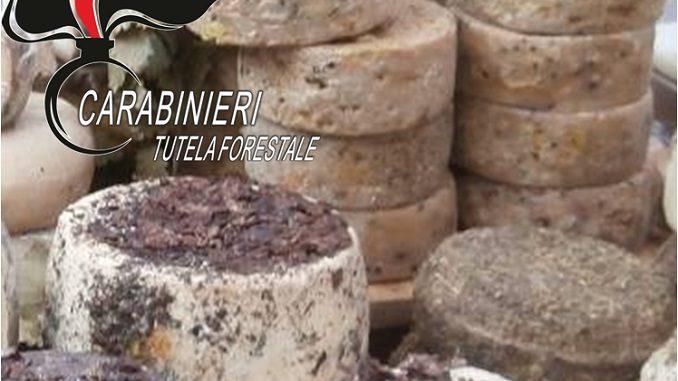 Controlli nei giorni della Fiera: sequestrato formaggio, multe per 30 mila euro
