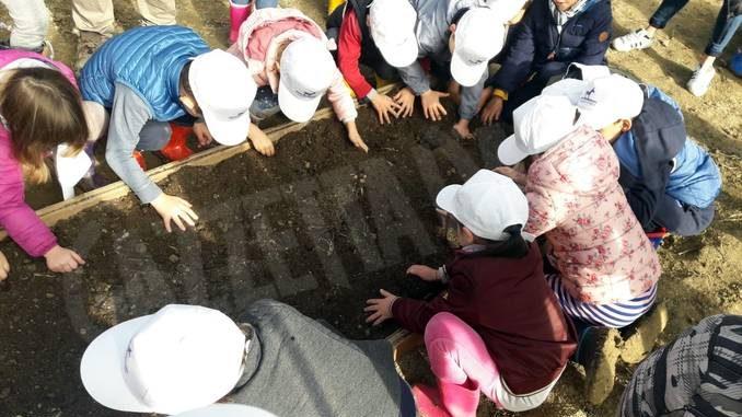 Alla scuola dell'infanzia Città di Alba si impara a fare l'orto