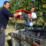 Nebbiolo: la solita macchina da vino