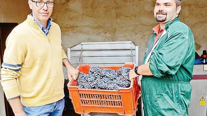 Si è conclusa la raccolta in carcere: uva di alta qualità per il Valelapena
