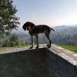 Montà: i bocconi avvelenati hanno ucciso tre cani da tartufo