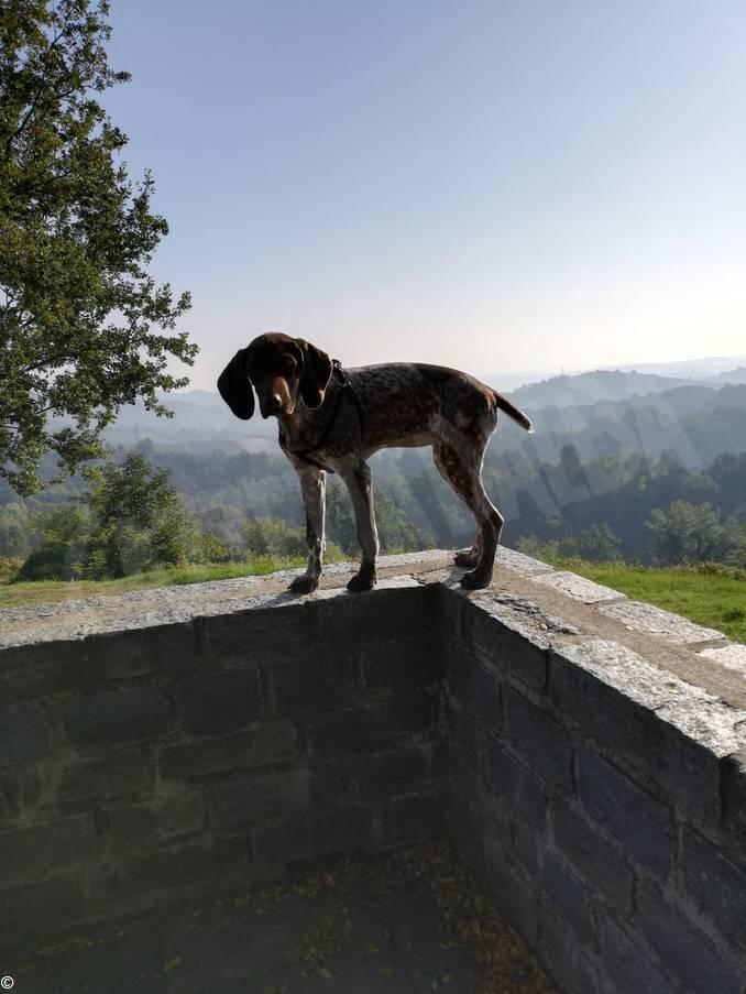 cane avvelenato 1