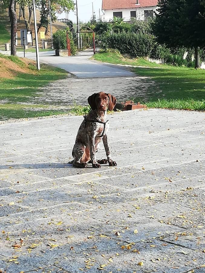 cane avvelenato 2