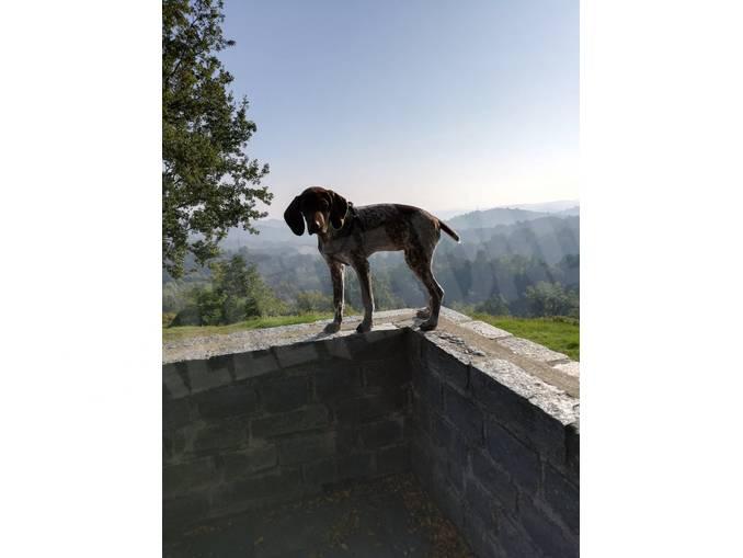 cane avvelenato Montà