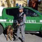 Kira, il pastore belga addestrato in Spagna per scovare le esche letali