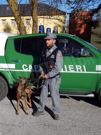 Montà: i bocconi avvelenati hanno ucciso tre cani da tartufo 4