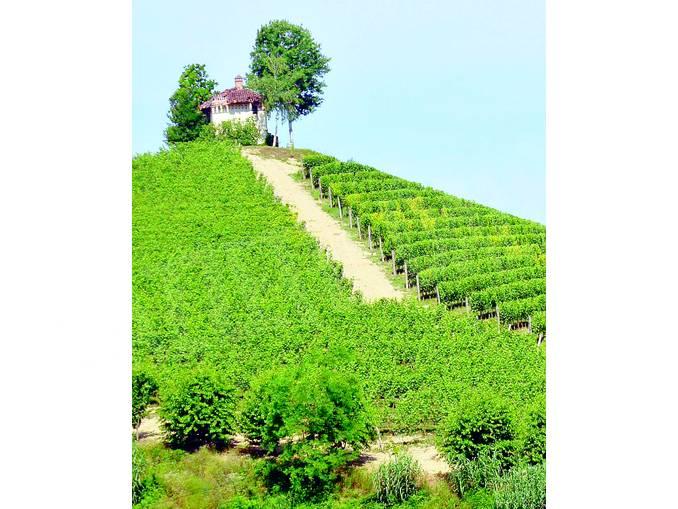 vigne Arneis