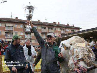Fiera Bue grasso di Carrù da record: 147 esemplari in concorso