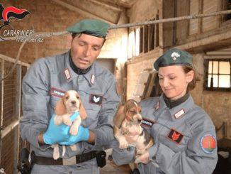 Carabinieri forestali: in aumento sanzioni amministrative e denunce