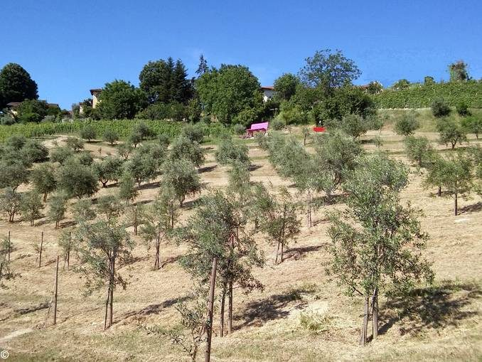 L'olio di Alba viene da Santa Rosalia 1