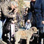 La sfilata di 115 trifolao con i tabui: il cane più anziano è di Carmagnola
