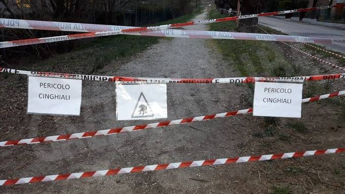 Comune di Alba eAtc non sono responsabili dell'abbattimento della cinghialessa di San Cassiano