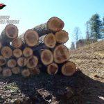 Trasforma abusivamente un bosco in noccioleto: denunciato un agricoltore