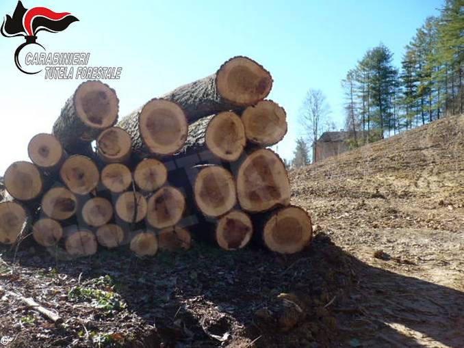 bosco tagliato