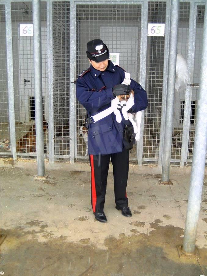 carabinieri controllo allevamento cani 1