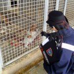 Denunciata un'allevatrice di cani di Cossano Belbo che prescriveva farmaci come se fosse un veterinario