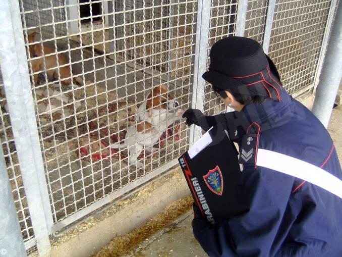 carabinieri controllo allevamento cani 2