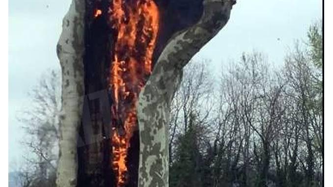 Cherasco: in fiamme un platano secolare del viale del castello