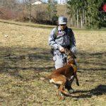 Cani antiveleno dei carabinieri forestali a San Damiano: scongiurato il pericolo di avvelenamento per un labrador