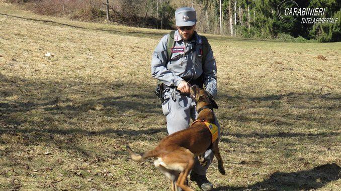 Cani antiveleno dei Carabinieri Forestali dopo gli avvelenamenti a San Damiano.