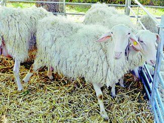 Alla fiera Anduma e tas-tuma spazio ai prodotti tipici, a mostre e a laboratori per lavorare la lana