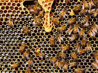 """Coldiretti lancia l'allarme: """"Troppo freddo, manca nettare per le api"""""""