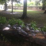 Ad Alba un banchetto per piccioni che rischia di costare caro