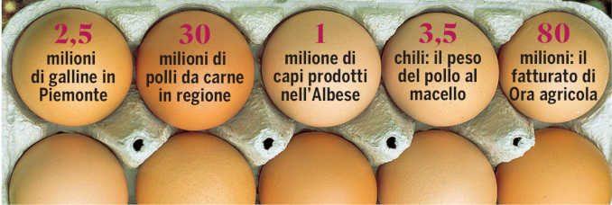 16 milioni di polli macellati l'anno: la struttura di Roreto di Cherasco