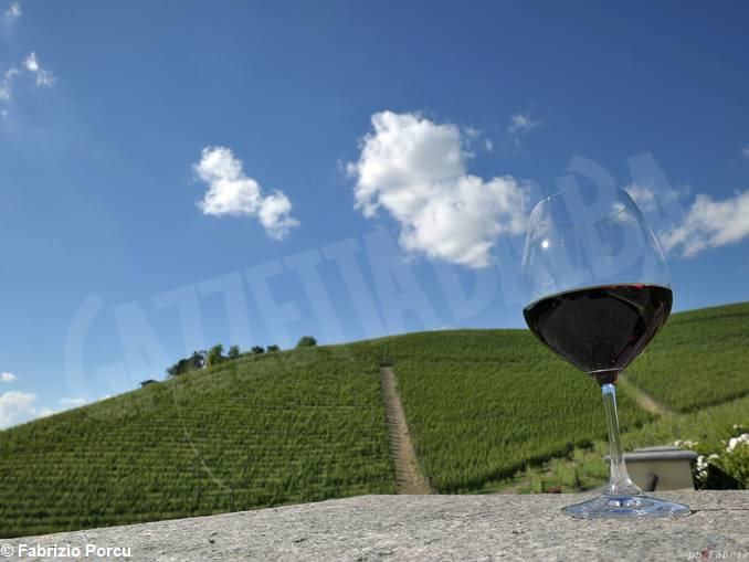 collisioni vini vigne