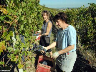 Le donne attive nell'agricoltura, custodi preziose di cibo e natura 3