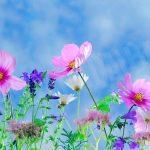 Entro oggi, sabato 29 giugno, ci si può iscrivere al concorso Alba in fiore