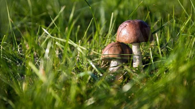 Raccolta dei funghi: tutte le regole e i costi per il tesserino