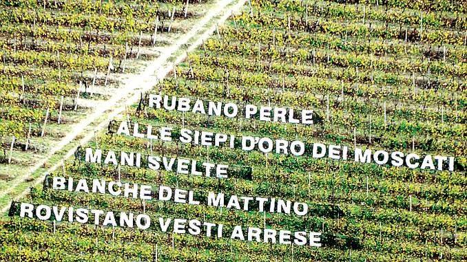 Corsa campestre tra i vigneti giovedì a Castiglione Tinella