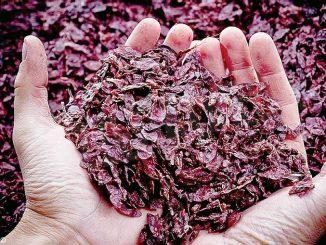 I benefici dell'economia circolare applicata al vino