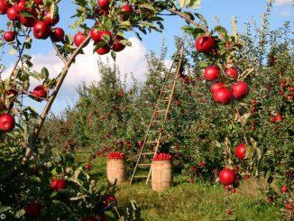 Controlli del lavoro in agricoltura: il Carabinieri trovano anche rifiuti smaltiti illecitamente